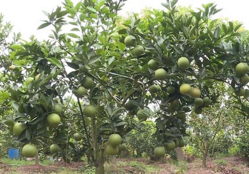 Lợi ích khi sử dụng phân bón hữu cơ trong sản xuất nông nghiệp